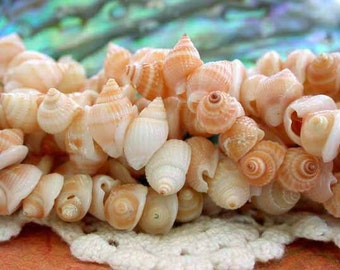 Shell Beads, Whole Shell Beads, Sea Shells, Natural Beads, Recycled Beads, Orange Frog Shell Side Drill Beads SHL-051