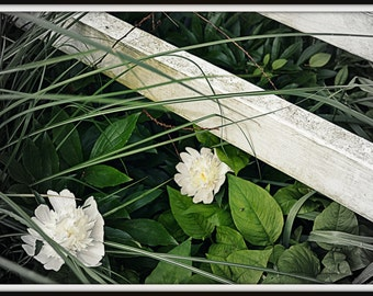 Flower by the Fence Digital Photograph - Instant Download