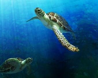 PRINT Sea Turtle Fine Art Print rescue sea turtle