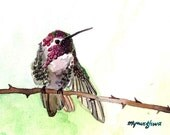 ACEO Limited Edition 3/25- Tiny little bird, Hummingbird art print, Cute bird, Art print of an original ACEO watercolor, Small gift idea