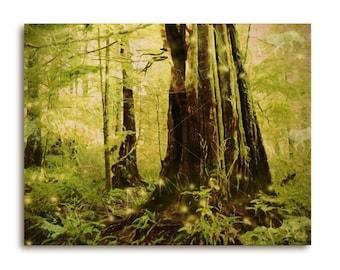 Enchanted rainforest wood art print, emerald green, magical forest