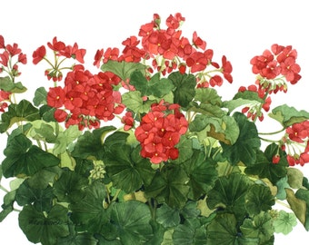 Red Geranium 2 Watercolor Painting Reproduction by Wanda's Watercolors