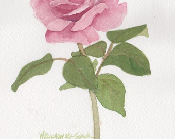 Pink Rose 6 5 x 7  Original Watercolor