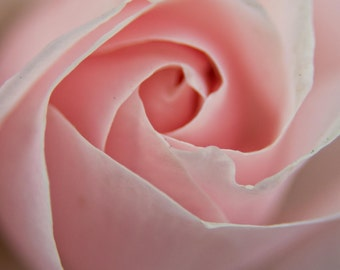Pink Rose Valentine's day present Greeting card