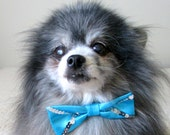 Formal Dog Bow Tie - Perfect Male Dog's Match to Turquoise Party Dress with Sequins, Oh So Gorgeous!