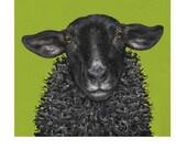 Brighton Sheep