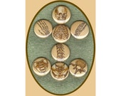 "8 Skeleton 1"" inch buttons, medallions or magnets set"