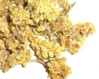 Helichrysum Flowers, Organic - Everlasting, Immortelle - Blossom Heads, Tops - Potpourri, Incense, Tea