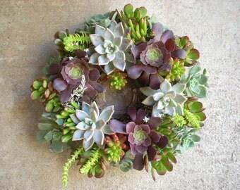 Succulent Centerpiece Weddings Holidays 10 inch diameter