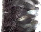 Rooster Coque Trim, black, on bias tape, per yard