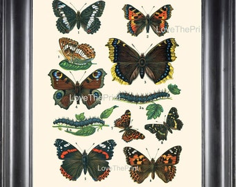 EUROPEAN BUTTERFLY PRINT 8x10 Botanical Art Print 1 Beautiful Butterflies Raupe Admiral