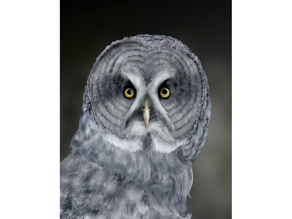 Great Gray Owl Signed Fine Art Print 9x12 Bird Lover Gift