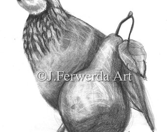 Pencil Drawing Print - Partridge And A Pear - Day 343
