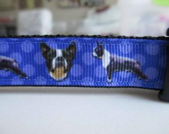"Boston Terrier Dog Collar 1"""