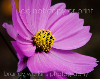 Wildflower photograph, nature photography, purple flower picture, pink flower picture, nature photograph, 5x7 print, art print, wall decor