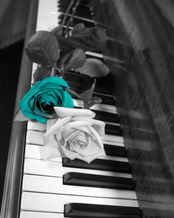 Black And White Rose Photography Black White Teal Rose Flowers