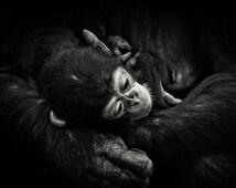 Baby Cimpanzee Photography, Fine Art, Wild Animal, Baby Monkey, Black and White, Nursery Decor, Fine Art Photo, Nature Photography