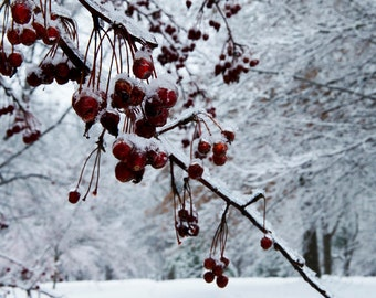 Snow Photography,Snow Print,Winter Photo,Ada Park, Grand Rapids,Michigan Print, Fine Art Print, Red,Red Berry Photo, Winter Print,Wall Decor
