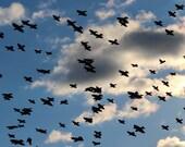Bird Photography. Patterns in Nature. Original Print. Expansive Cloudy Blue Sky Photograph. Fine Art Print. Home Decor. 'Avian Air Raid' - NancyJCreates