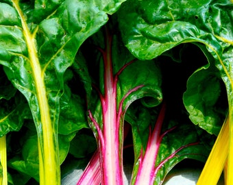 Swiss Chard Seed ~Certified Organic Heirloom RAINBOW MIX- Biannual !