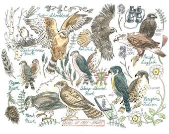 """Retro, Illustration, Birds, Hawks, Falcons, Birding- Hawk Art Print 8.5""""x11''"""