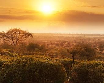 Serengeti at Sunset, Tanzania. Fine Art Landscape Photography by Roy Hsu