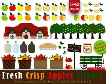 53 PNG Apple clipart, harvest, fall apples, fresh apples clipart, apples digital, apple, apple pikin, apple tree, sider jug, apple bushel
