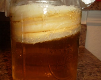 Honey Jun Scoby with Strong Raw Honey & Green Tea Starter