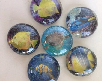 Set of 6 iridescent glitter tropical fish glass magnets. Sure to brighten any fridge locker or white board