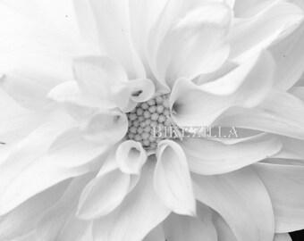 Black and White: Dahlia #3A (BW)