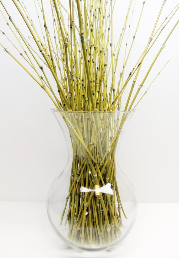 Lot of 24 Real Bamboo Sticks 8 to 24 Crafting / by ...