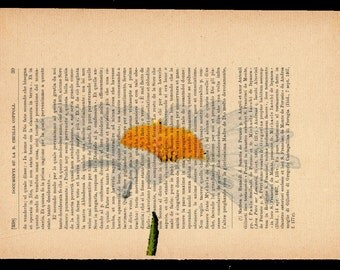Flower prints on sheets of paper. P.39, La Margherita