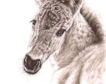 Wildhorse Foal - Fine Art Print