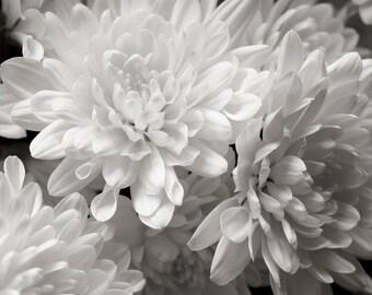 """Floral_ #1  """"Summer Dalias"""""""