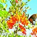 Mexican Bird Of Paradise with Monarch Butterfly Texas Art Limited Edition Wall Art Giclee Print