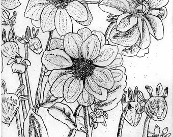 Dahlias  - Hand Printed, Black & White Original Intaglio Etching and Engraving, Limited Edition, Flower, Botanical , Flower Print, Garden