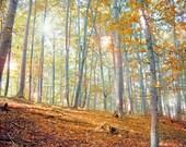 photo print, photography print, home decor, large size wall art, forest photo, woodland photo, magical photo, fairy elvish
