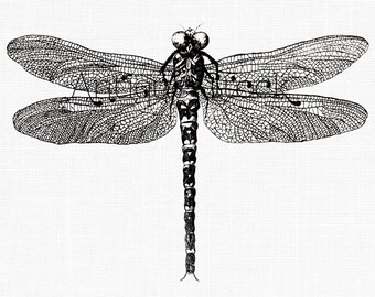 Antique Dragonfly Image - Insect Digital Stamp - Vintage illustration for Scrapbooking, Cards, Tags, Transfers, Invitations, Notebooks..