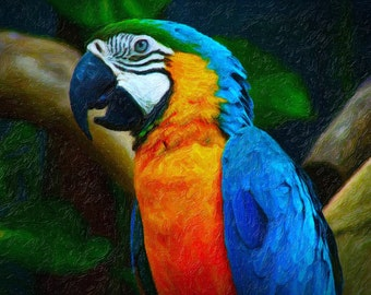 Beautiful, vibrant Macaw