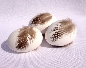 3 White chicken eggs decorated with feathers