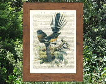 New Zealand Fantail bird on an antique book page. 212 year old paper. Vintage text art.