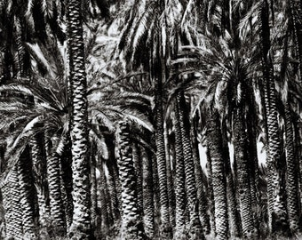 Black & White Palm Tree Photography, Wall Art Print, Nature Photography, Landscape Photography, Dark, Gray, Tropical Trees