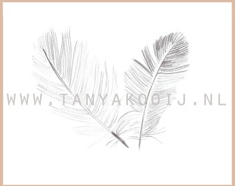 Feathers clip art. Ideal as digital illustration for your logo and businesscard.
