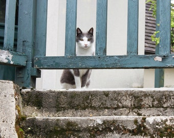 Curious cat behind a wooden fence.