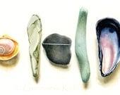 Shells Art Print, Beach Stones and Shells Art, Shell Beach Stone Illustration, Art Print of Original Watercolor Painting
