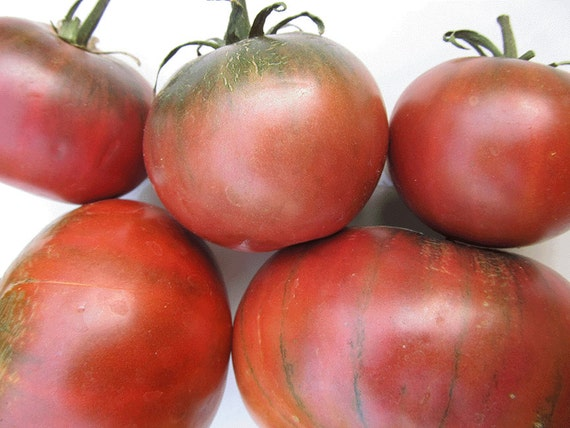 Tomato: Cherokee Chocolate