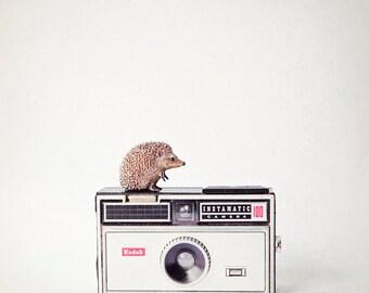 Nursery wall art animals, vintage camera photo, kids wall art, nursery art, childs room decor - The Hedgehog and the Instamatic