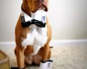 Wedding Dog Collar Black Bow Tie Faux Leather