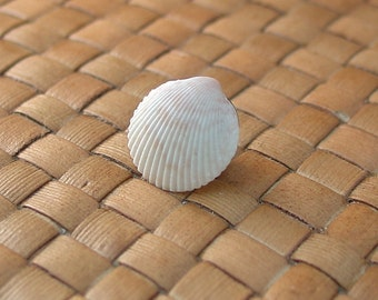 Cockle Shell Tie Tack
