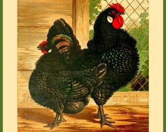 antique victorian poultry illustration black frizzled fowls print DIGITAL DOWNLOAD